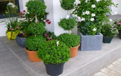 les arbustes et feuillages