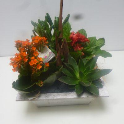 jardin-de-plantes-400x400