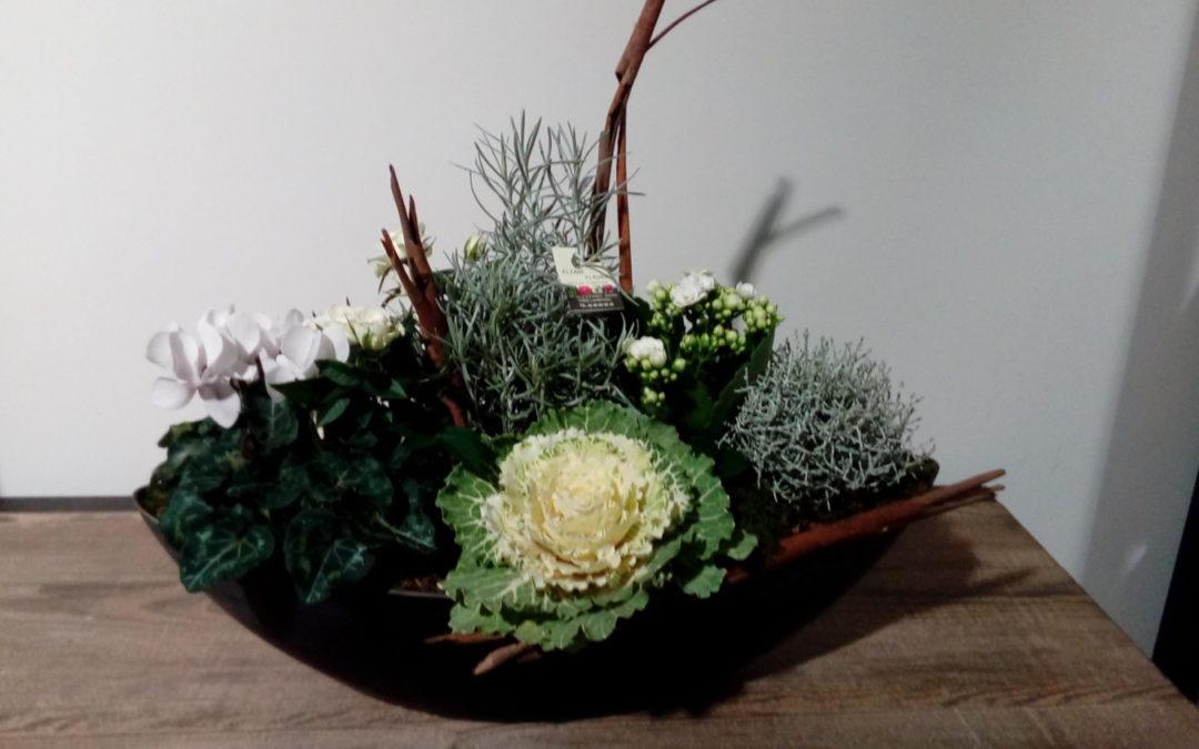 Assemblage de plantes blanches dans barque